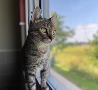 DCHS Featured Pet: Henry