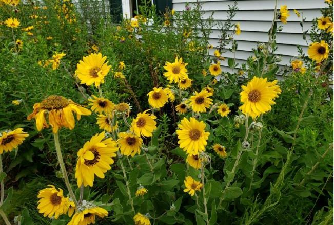 Native Plants Education