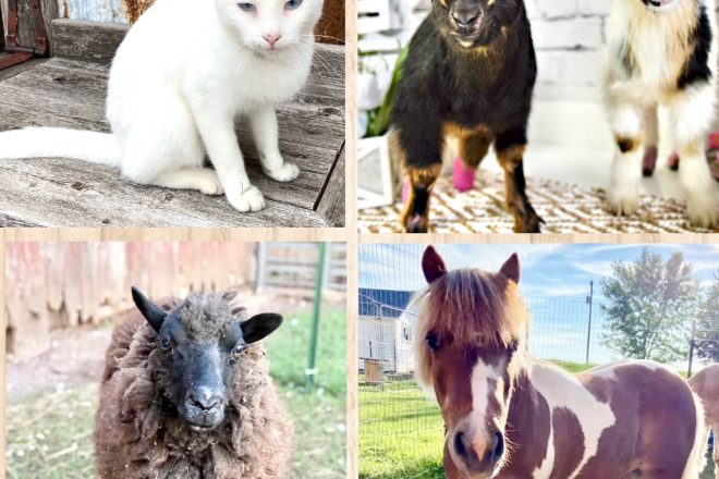 Petting Zoo, Trick-or-Treating at DENN Oct. 23